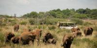 safari drive olifante