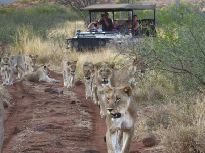 tuningi-safari-game-drive-madikwe