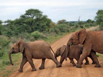 African-Safari-Tour-Thakadu-River-Camp-Elephants-672x372
