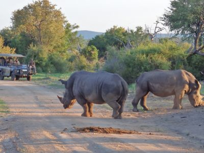 Thakadu-River-Camp-Madikwe-Game-Reserve