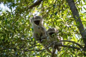 SouthAfrica-BanjoSafari-Feb2019-0068-of-0146-9145
